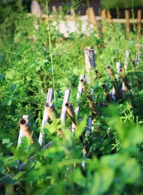 愿你有一所小院,繁花爬过篱笆