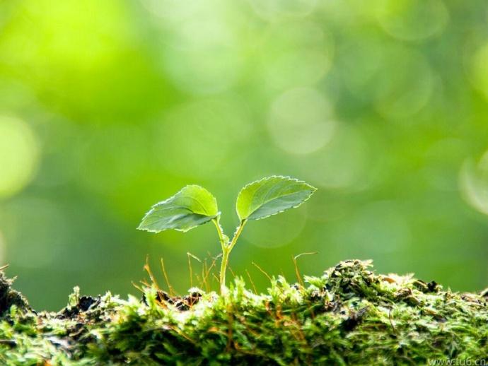 春天到了,万物开始生长发芽