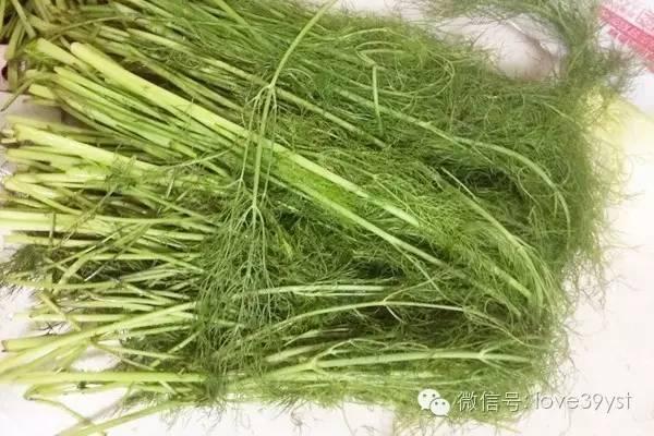 它是绿叶蔬菜第一名 养阳驱寒 还是胃病克星