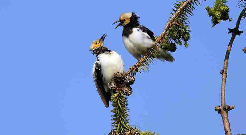 武夷山那些美得让人目瞪口呆的鸟
