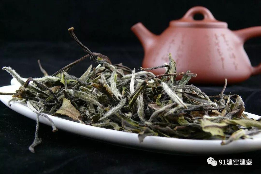 白茶,三年药,七年宝,是真的吗?