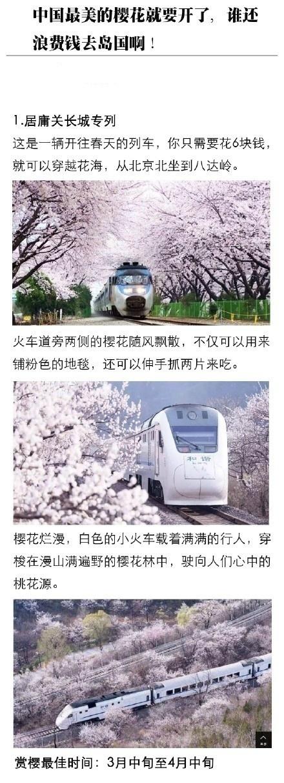 看樱花要去日本?那你就OUT啦,中国最美的樱花就要开啦!