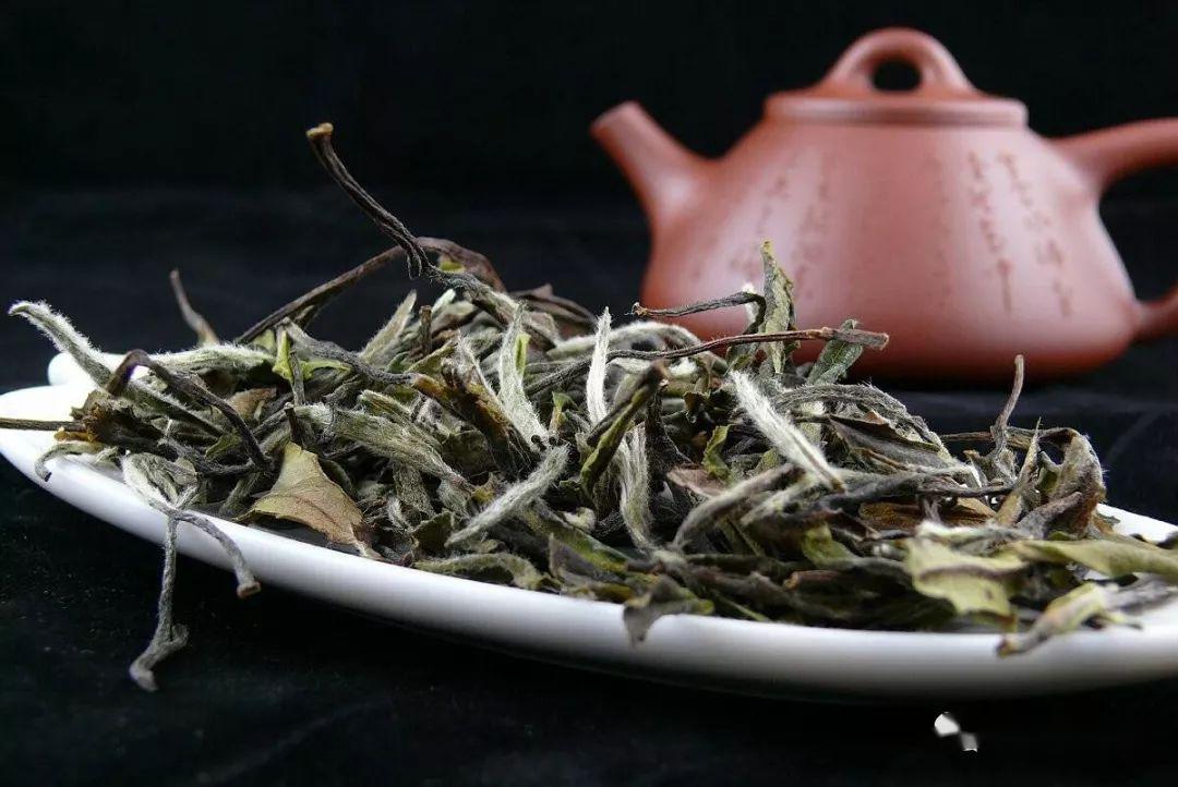 白茶好不好,身体会慢慢告诉你!