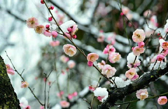 最是一年春好处,无意苦争春,零落成泥碾作尘