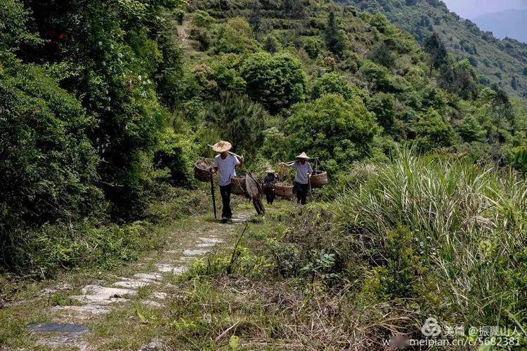 """这条路,让德化通向世界!""""中国白""""得以名扬五洲四海……"""