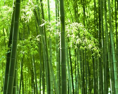 不一样的竹之美,摄人心魄的中式禅意